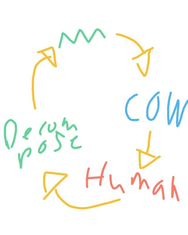 What is difference between food chain and food web? And ...
