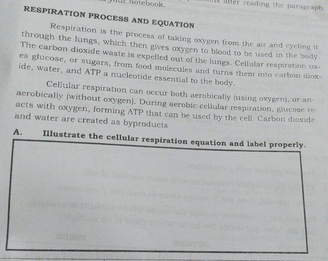Respiration Process And Equationrespation Is The Process Of Taking Oxygen From The Air And Cycling Brainly Ph