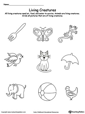 1st grade, 2nd grade, Kindergarten Science Worksheets: Non-living ...