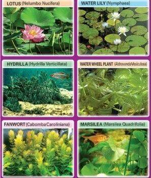 Terrestrial Plants Ima...